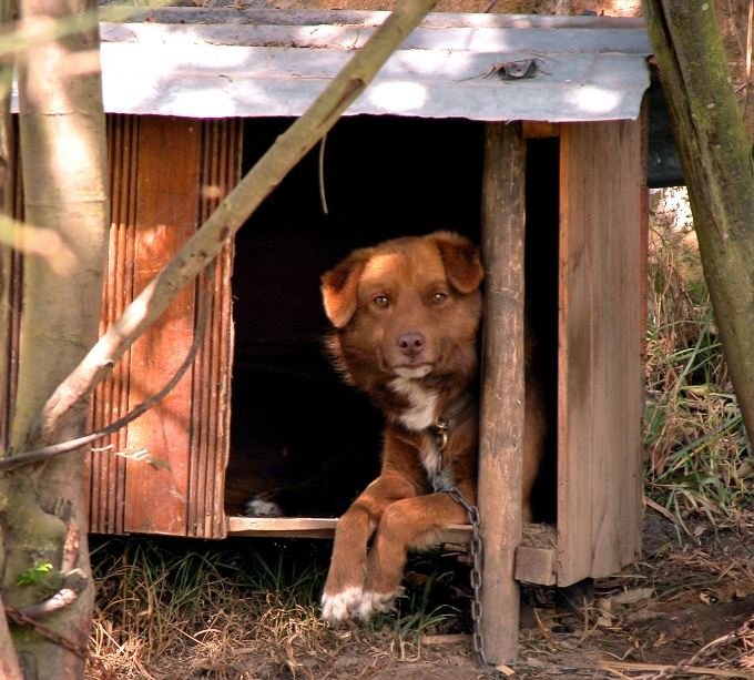 строительство будки для собаки