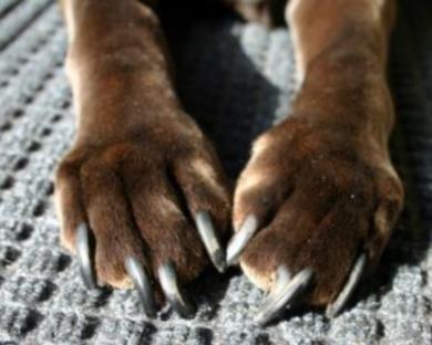 Если животное живет в доме - регулярная стрижка когтей ему необходима