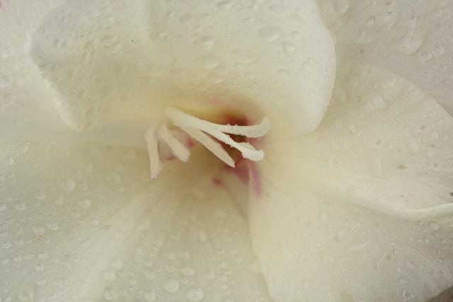 Большинство видов орхидеи растет в тропических широтах