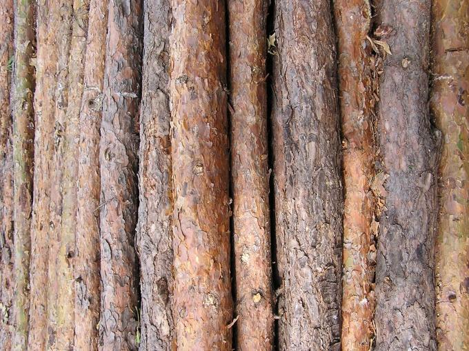 Для стильной трости найдите подходящее дерево