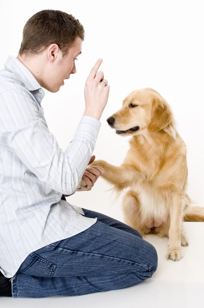 дрессировать собак