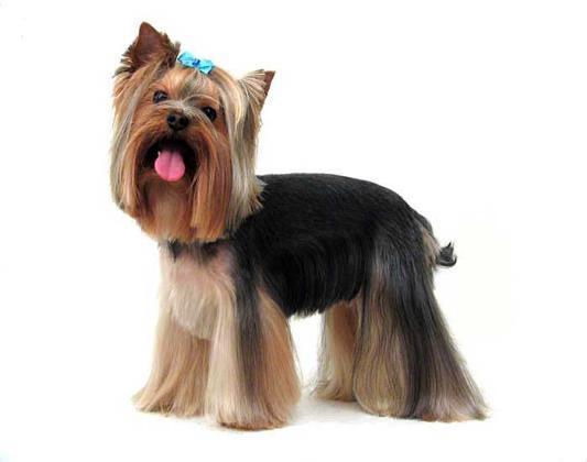 как постричь лапы у собаки