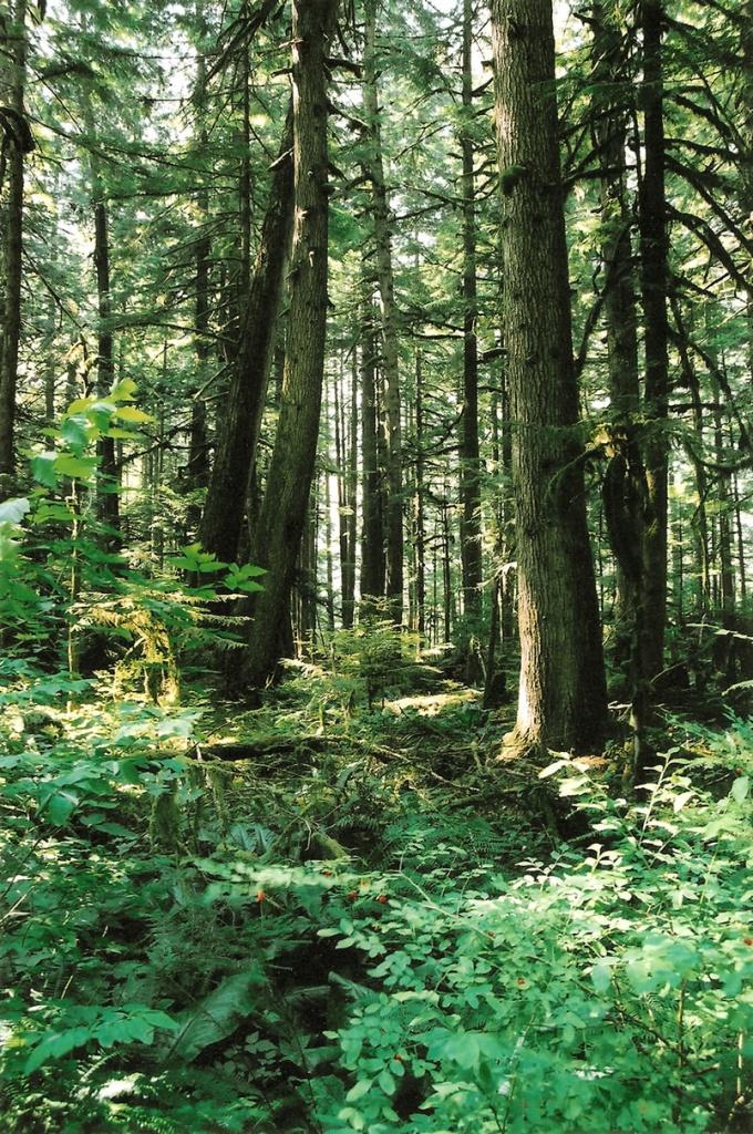 Как сохранить красоту нашей планеты?