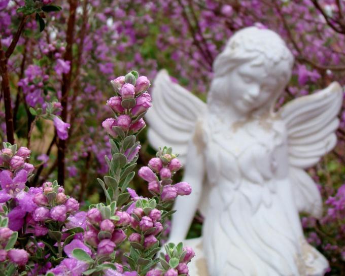 Общаться с Ангелом дозволено только через сердце