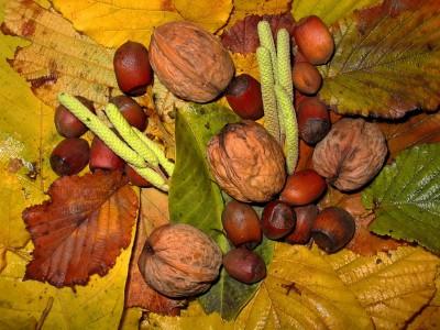 Из маленького орешка может вырасти огромное дерево!