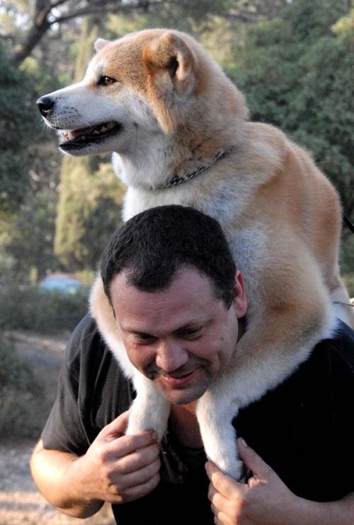 любите свою собаку