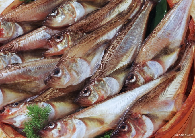 Fresh fish can be put out in several ways