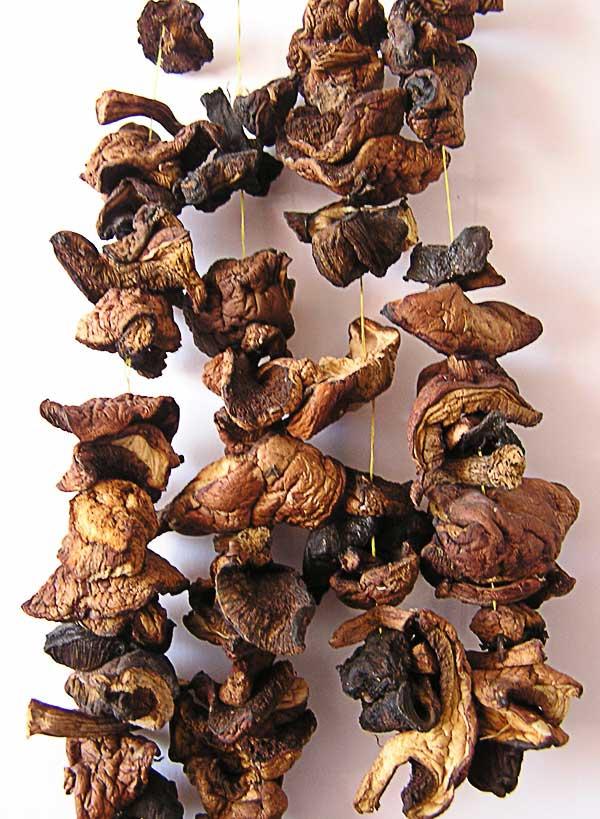 Cушеные грибы огут храниться очень долго, не теряя своих кулинарных свойств
