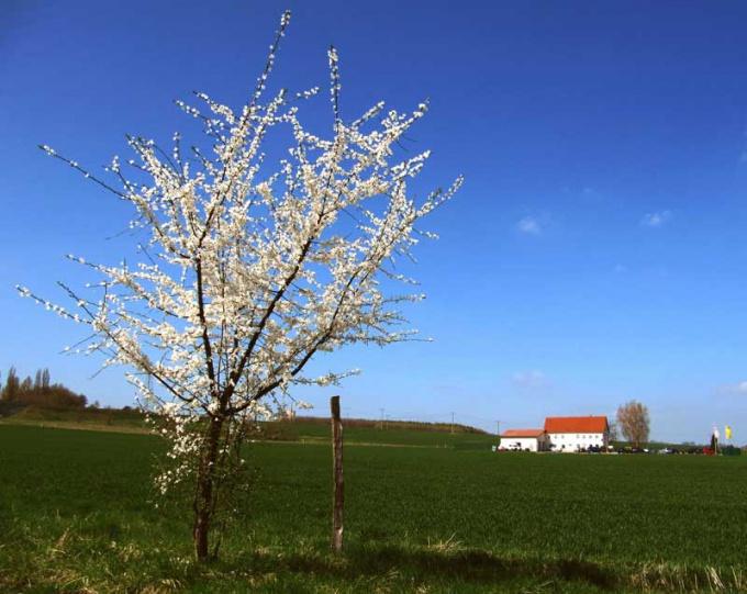 Деревья лучше всего пересаживать весной