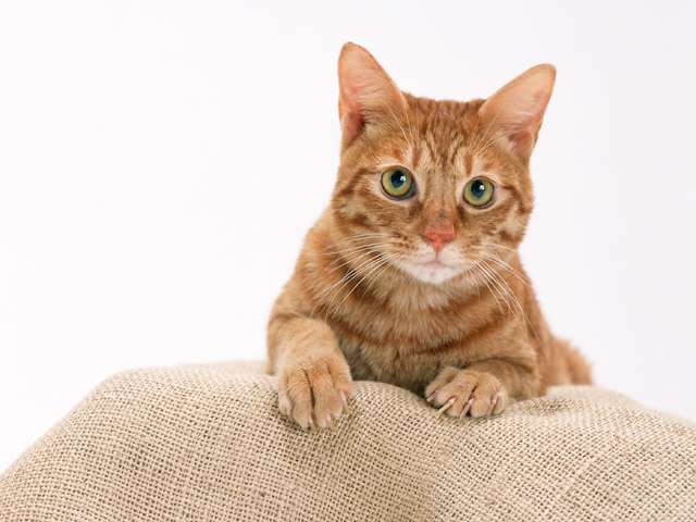 To the castrated cat is not sick, it should be fed properly
