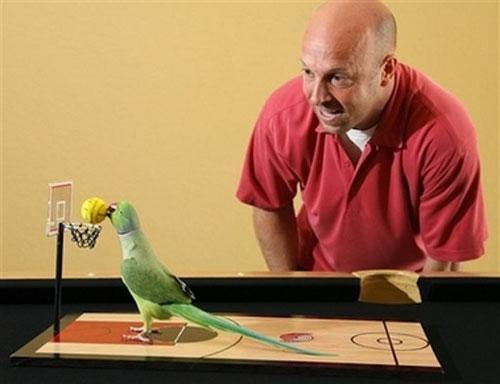 как игрыть с папугаем