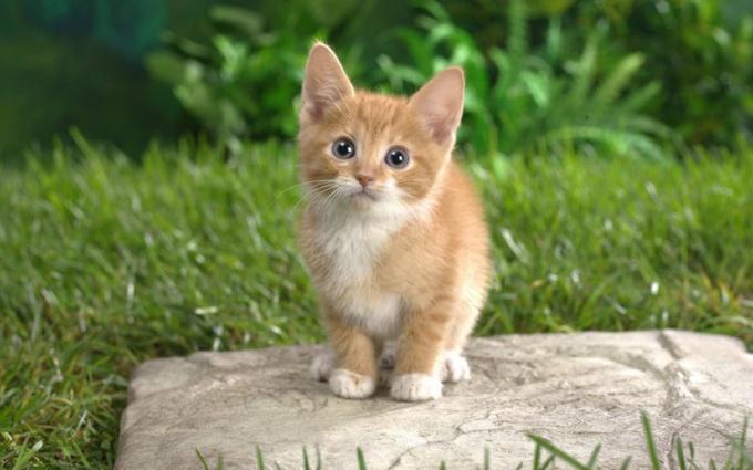 Как придумать котенку комичную кличку