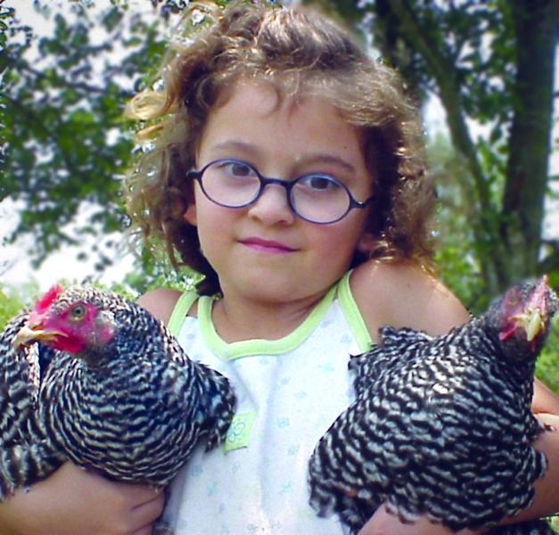 как вырастить курицу на даче