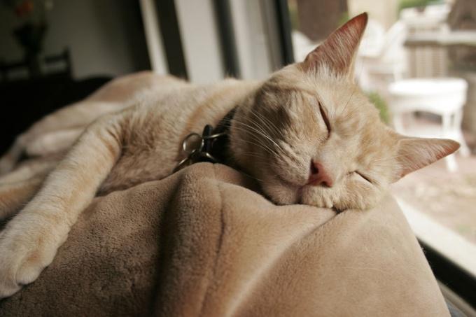 Сны видят все живые существа, включая вашу кошку