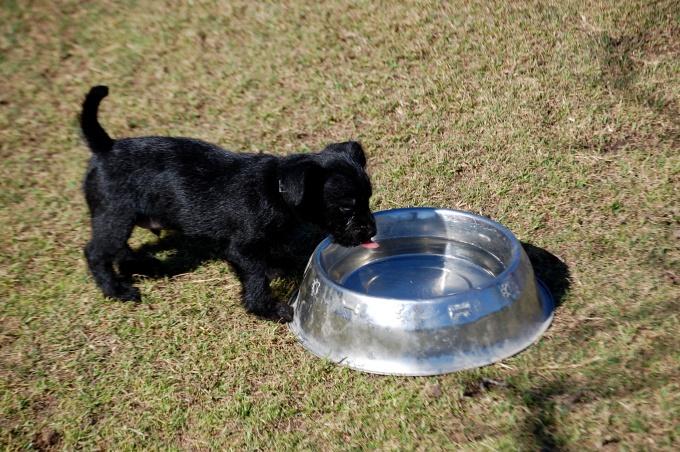 как кормить щенка в 2 месяца