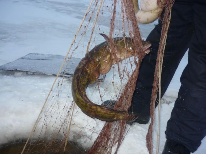 Как поставить сеть под лед