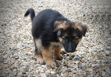 как научить собаку ходить в туалет в одно место маленькую собачку