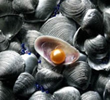 How to distinguish <strong>pearls</strong> <b>fake</b>