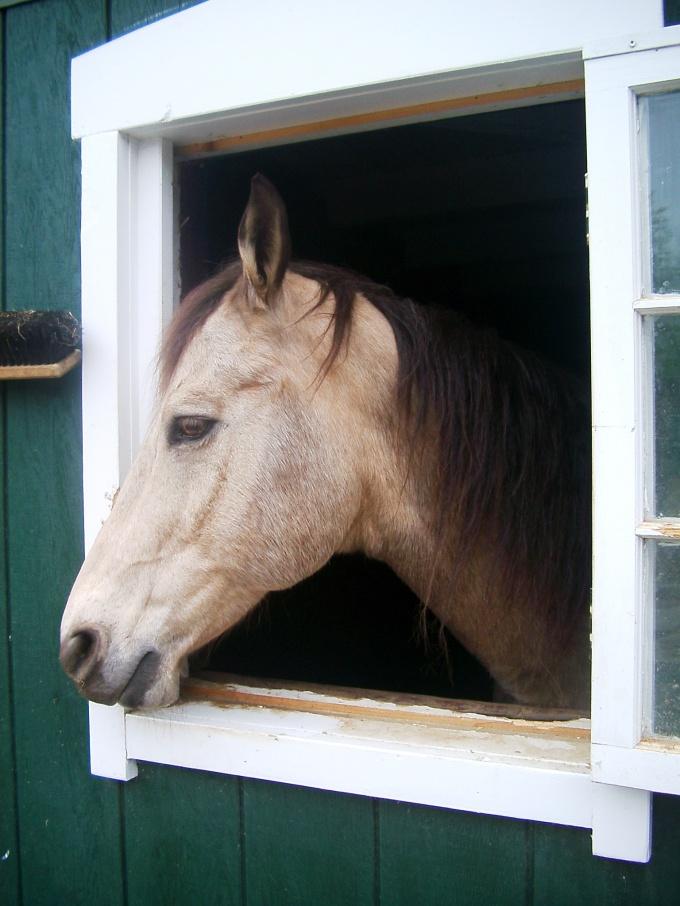 Построить хорошую конюшню может только знаток коневодства