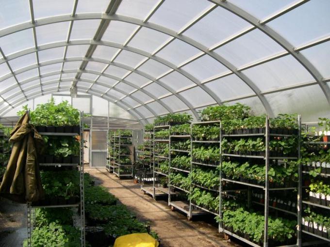 В отопленной теплице растениям гораздо отменнее живется