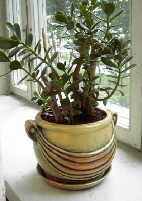 How to transplant a money tree