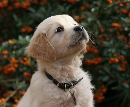 как отучить собаку поедать отбросы