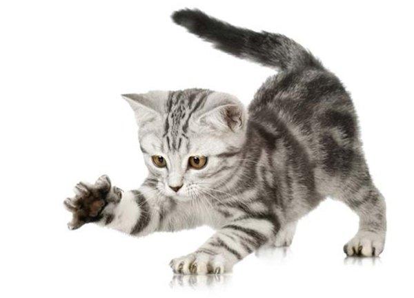 Как отучить котенка кусаться и царапаться