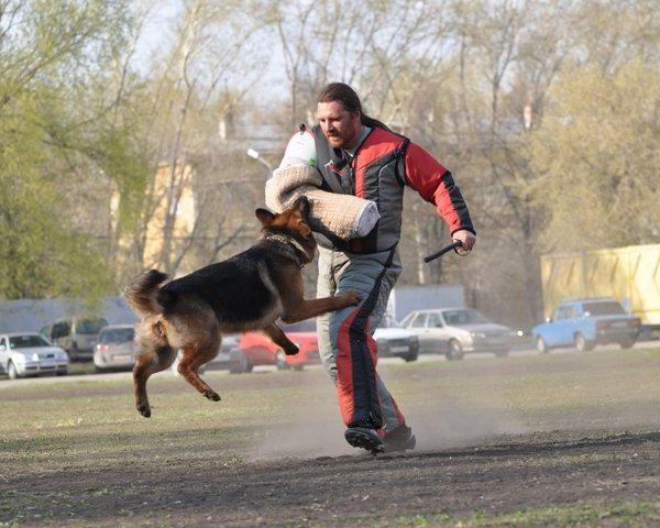 "Как обучить собаку команде ""фас"""