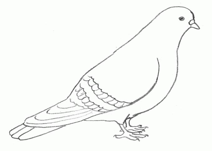 Как нарисовать <strong>голубя</strong>