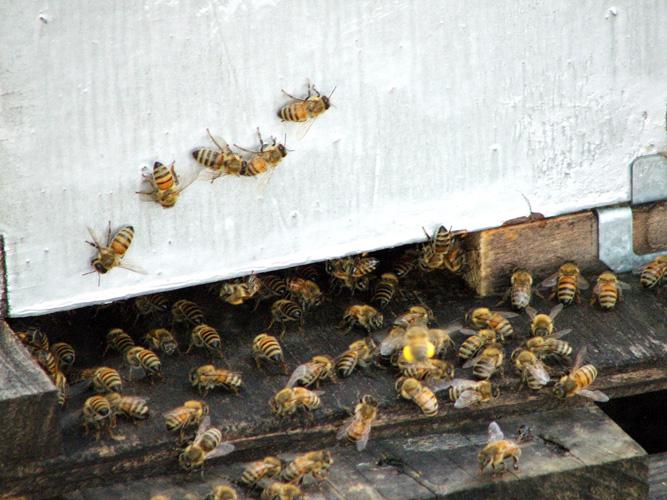 Есть дом для пчел - будет мед на стол.