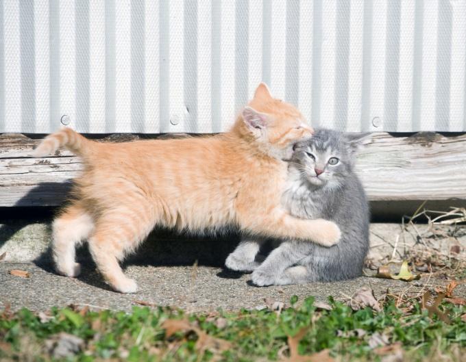 отучить котенка кусаться