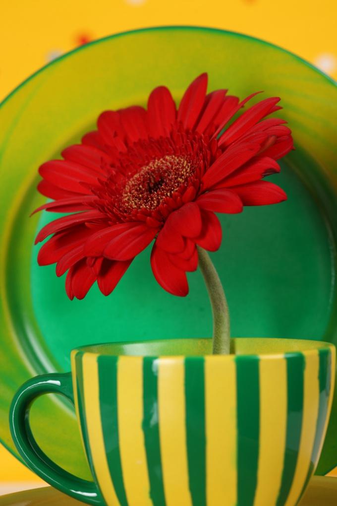 Ради эксперимента можно перекрасить цветок