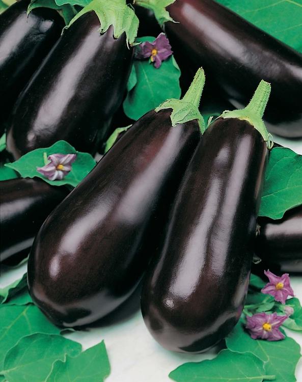 Баклажаны – достаточно капризное культурное растение
