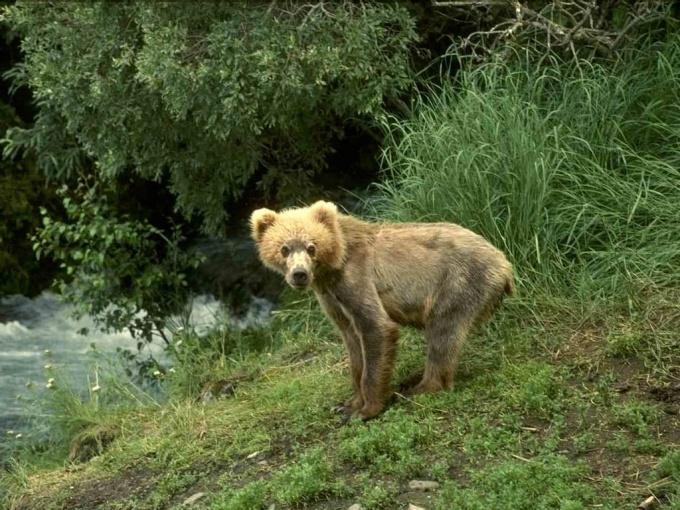 Как быть в лесу с животными
