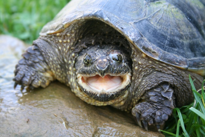 Домашняя черепаха знает, как ее зовут
