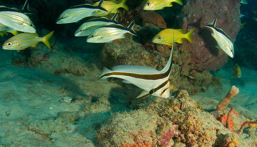 как разводить рыбок