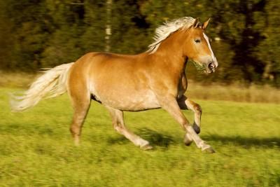 понять лошадь