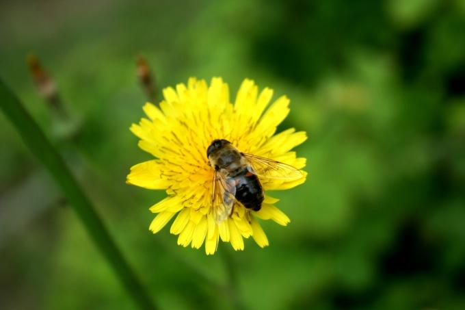Берите пример с пчелы