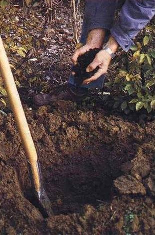 Как посадить <strong>деревце</strong>