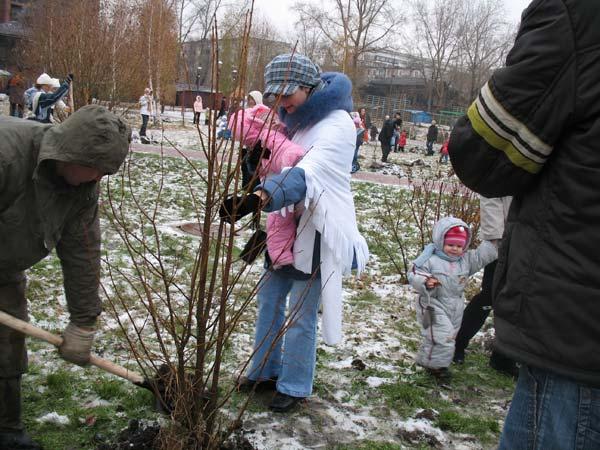 Как посадить деревце