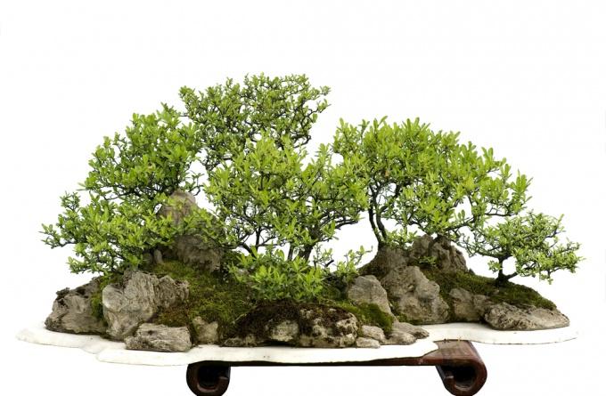 Как сделать искусственные деревья