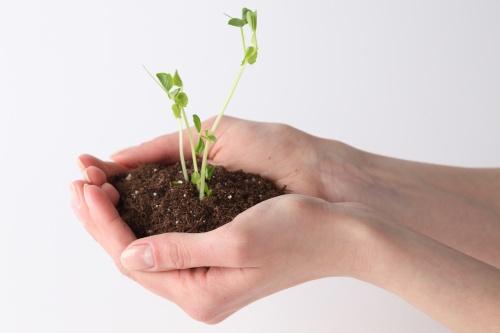 Как посеять рассаду