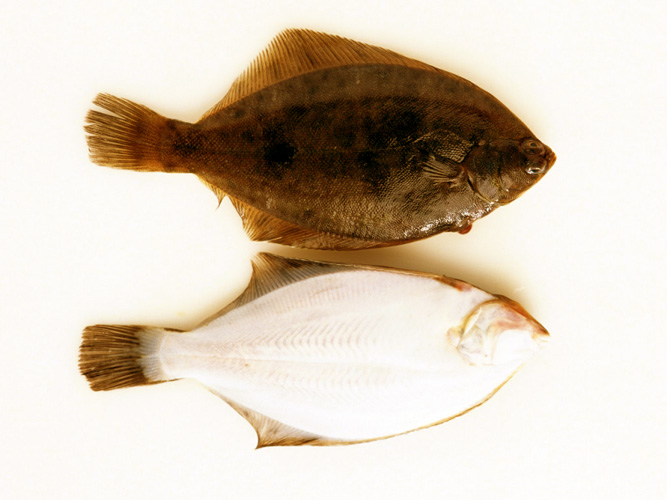 Fish-iodine.