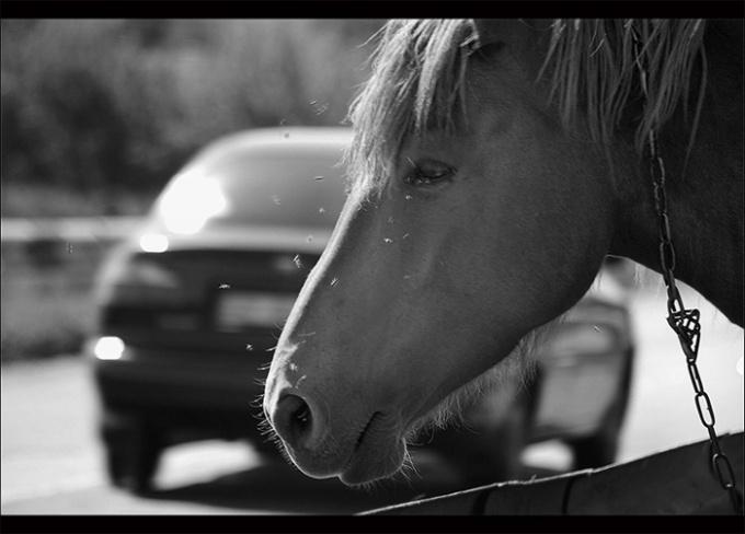 По подсчетам Джеймса Уатта, лошадь способна поднять груз весом 180 фунт на высоту 181 фут.