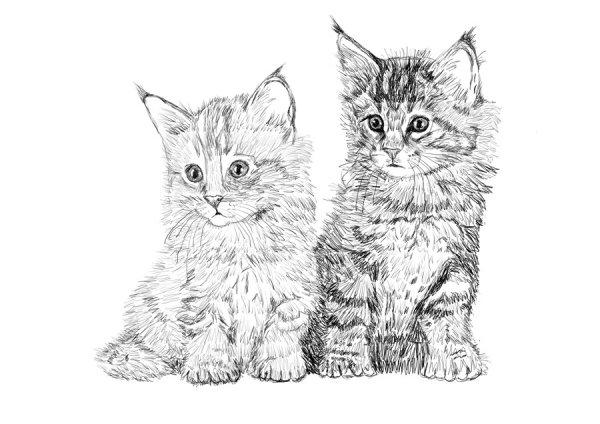 Как нарисовать котенка карандашом