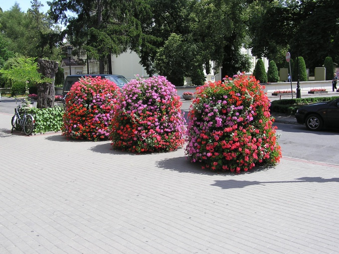 Круглую клумбу из покрышки можно засадить пышными растениями
