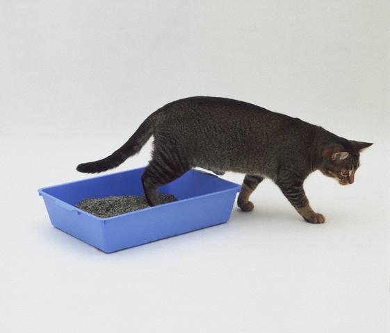 Кошки - чистоплотные животные, они с удовольствие пользуются лотком.