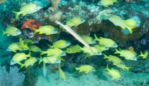 Как сделать самим фон для аквариума