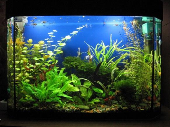 Как отмыть аквариум