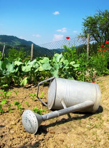 Как сажать сад
